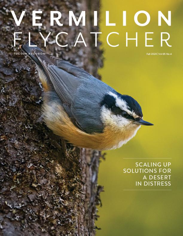 Tucson Audubon Society Vermilion Flycatcher Publication Cover